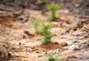 Свыше 43 тыс. га подмосковного леса восстановлено после эпидемии жука‑короеда