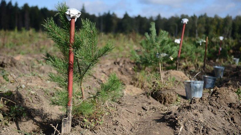 В экологической акции «Наш лес» приняли участие  250 тыс. жителей Подмосковья