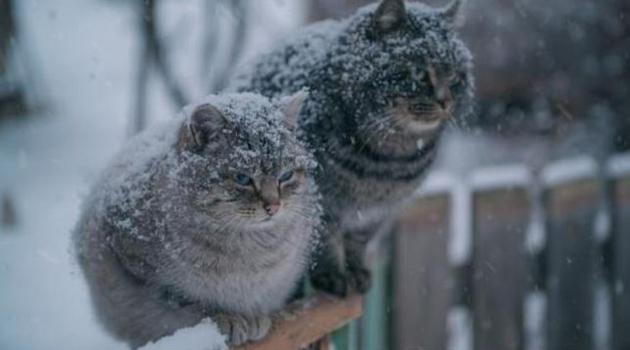 Погода не радует: на выходных москвичей ждет мокрый снег