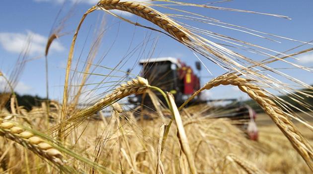 Фермеры Подмосковья вырастили 400 тыс. т зерновых