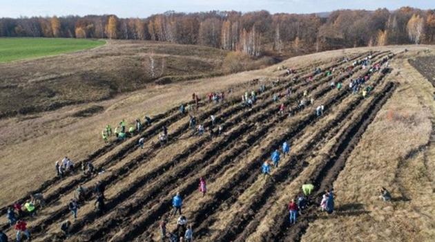 На Куликовом поле воссоздадут лес, в котором прятался Засадный полк