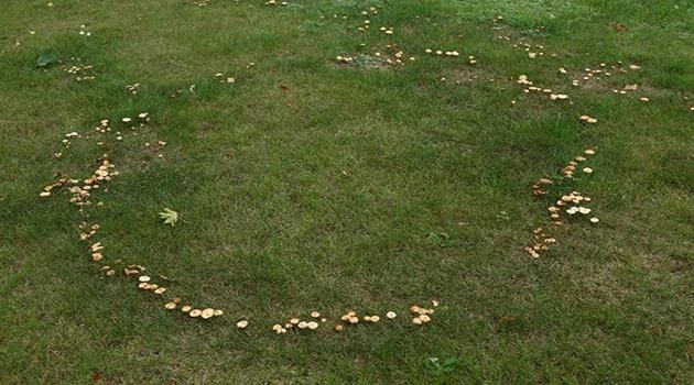Под Наро-Фоминском обнаружены «Ведьмины круги»