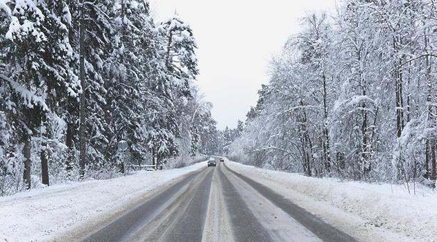 Патрулирования для недопущения рубок елок начнется в лесах Подмосковья 10 декабря