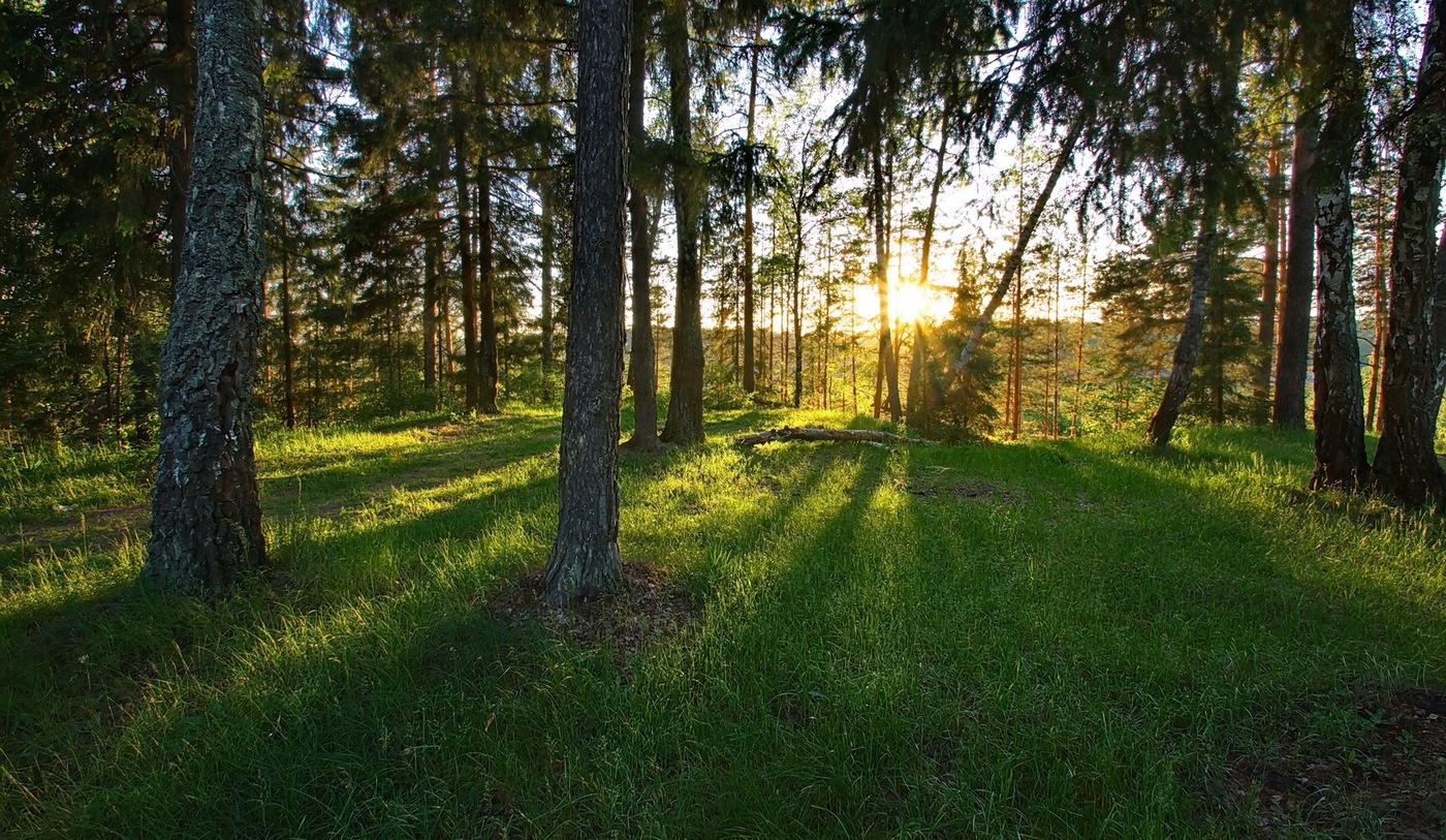 Развитие экотуризма в Подмосковье: теперь можно открыть свое дело в лесу