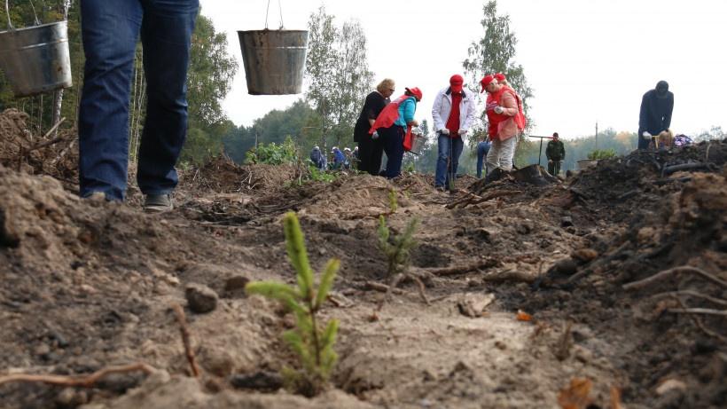 Почти две тысячи жителей Красногорска приняли участие в посадке леса