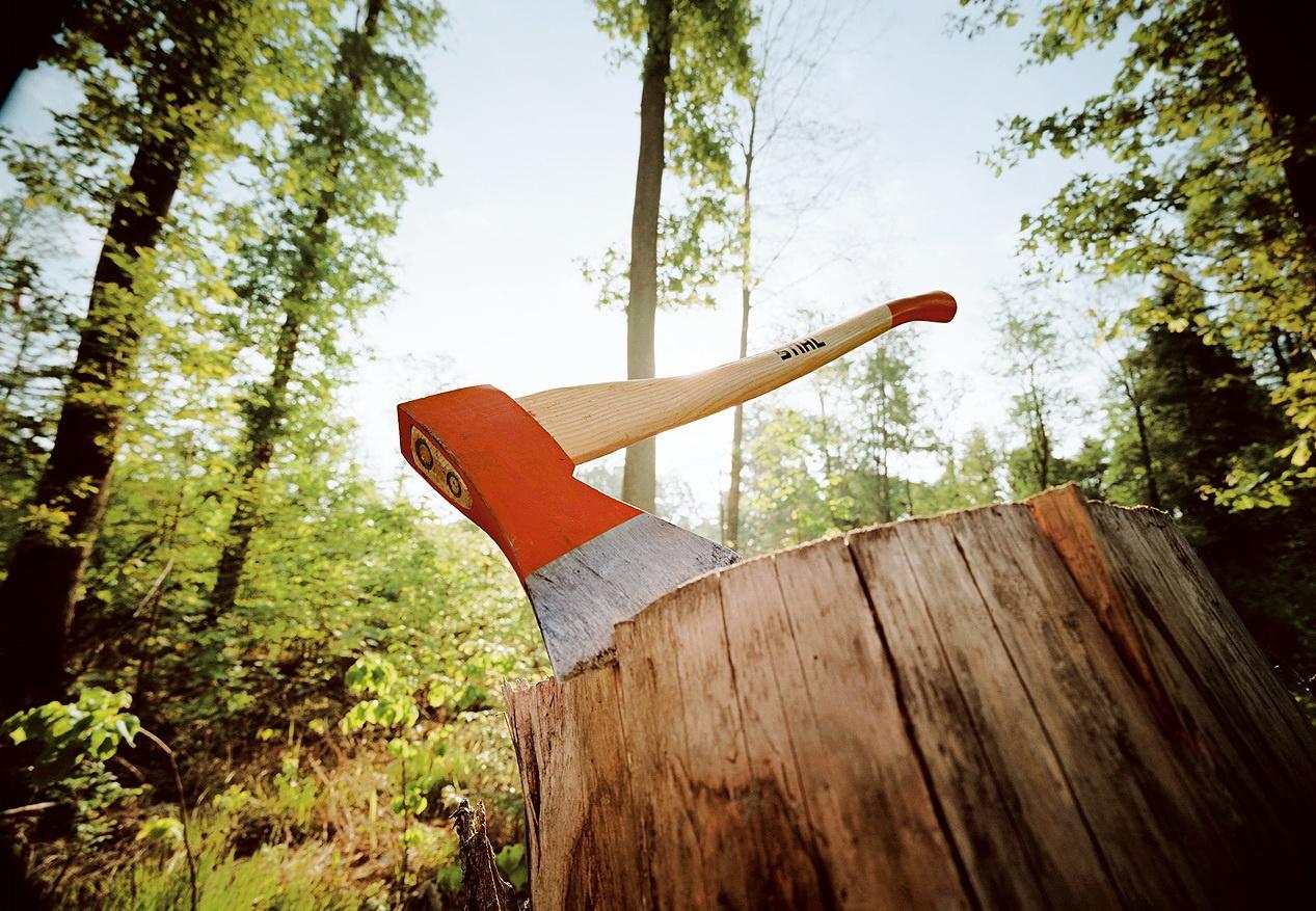 В Раменском округе предотвратили незаконную вырубку деревьев