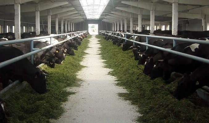 Подмосковная ветслужба следит за 6 тысячами производителей мяса, молока и рыбы